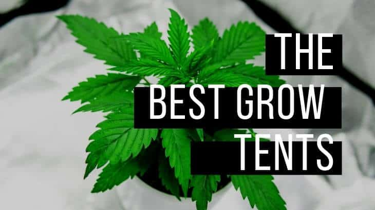 Best grow tent article