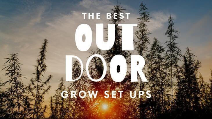 Best Outdoor Grow Setup