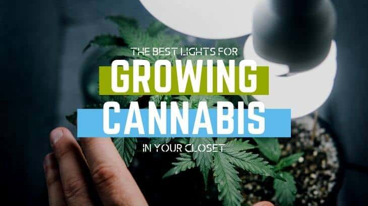 The Best Lights for Growing Weed in Closet Featured Image