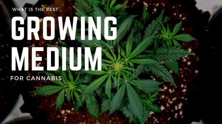 Best Growing Medium for Weed Main