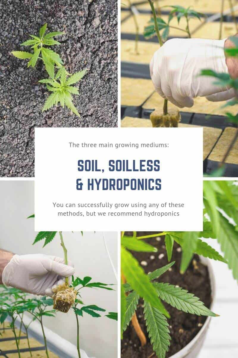 The Three Main Growing Mediums For Cannabis (1)